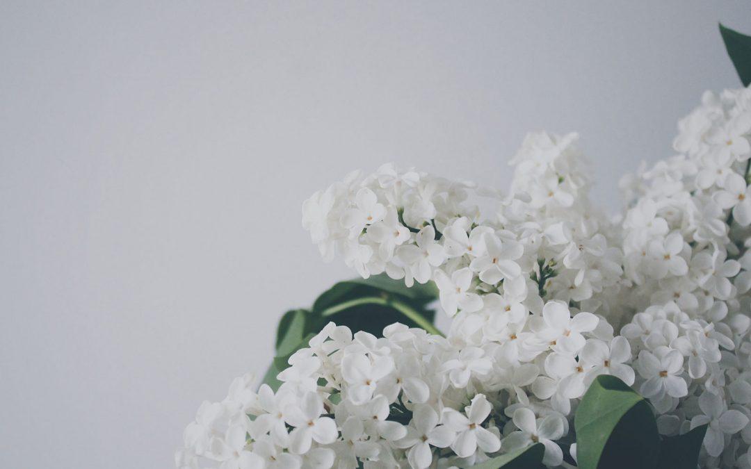 Zastínění zimní zahrady – jak vyřešit?